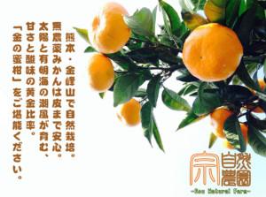 【自然栽培】最高糖度16.8%!?美味しいみかんの栽培スケジュール