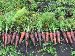 寒すぎる日本列島で生き抜くため、厳しい冬にこそ食べておきたい野菜