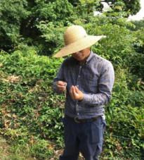 池田道明氏に訊く!自然栽培でみかんを育てるための摘果やり方まとめ